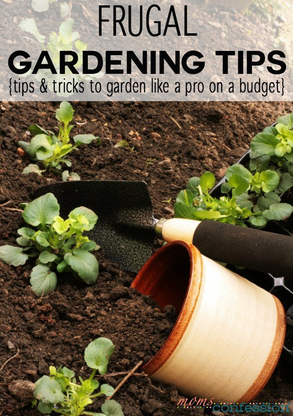 If we're not careful, the cost of gardening can add up. With these frugal gardening tips, you can be a gardening pro and still stay on a budget. WINI! WIN!