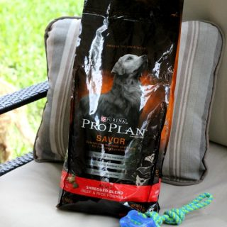 Purina Pro Plan - the only dog food for our Maddie + a No Sew Dog Bed Project that only takes 15 minutes and less than $10 to make!