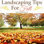 Landscaping Tips for Fall