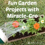 Fun Garden Projects with Miracle-Gro