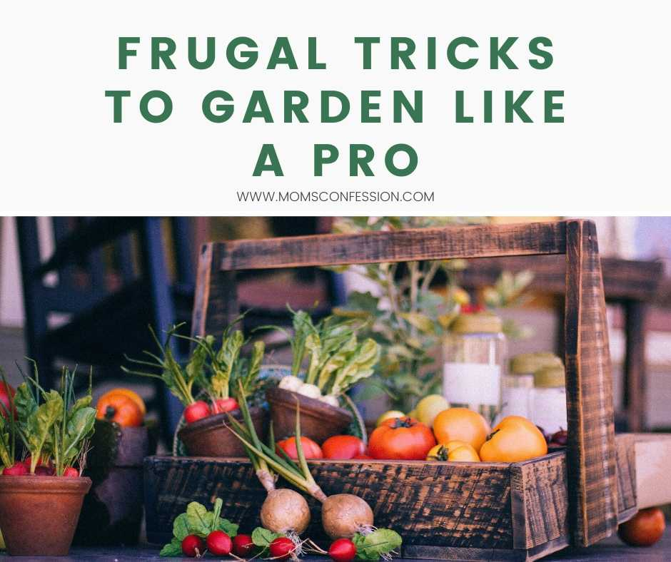 Frugal Tricks to Garden Like A Pro