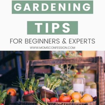 Frugal Gardening Tips & Tricks for Beginners and Experts