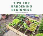 Tips for Gardening Beginners