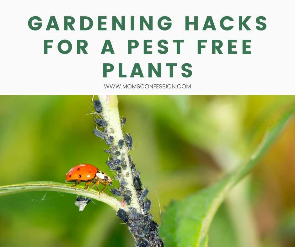 Gardening Hacks for a Pest Free Plants