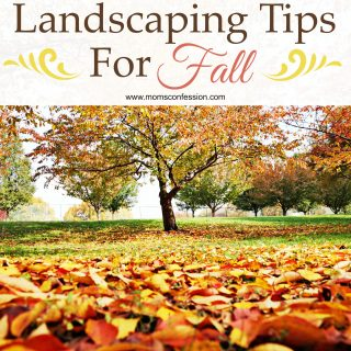 These landscaping tips for fall are perfect to get your lawn in order for the season. Follow these tips for fall and enjoy your landscaped yard all season.