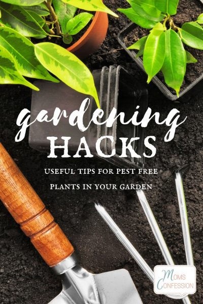 Gardening Tips &  Hacks for Pest Free Plants