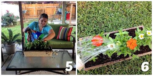 Garden Project 5-6